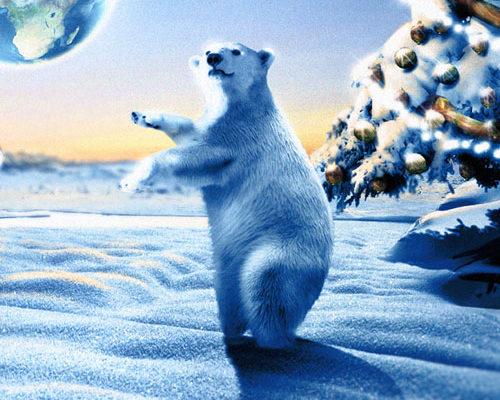 création, compositing, montage image Ours polaire, voeux de la banque Crédit Mutuel
