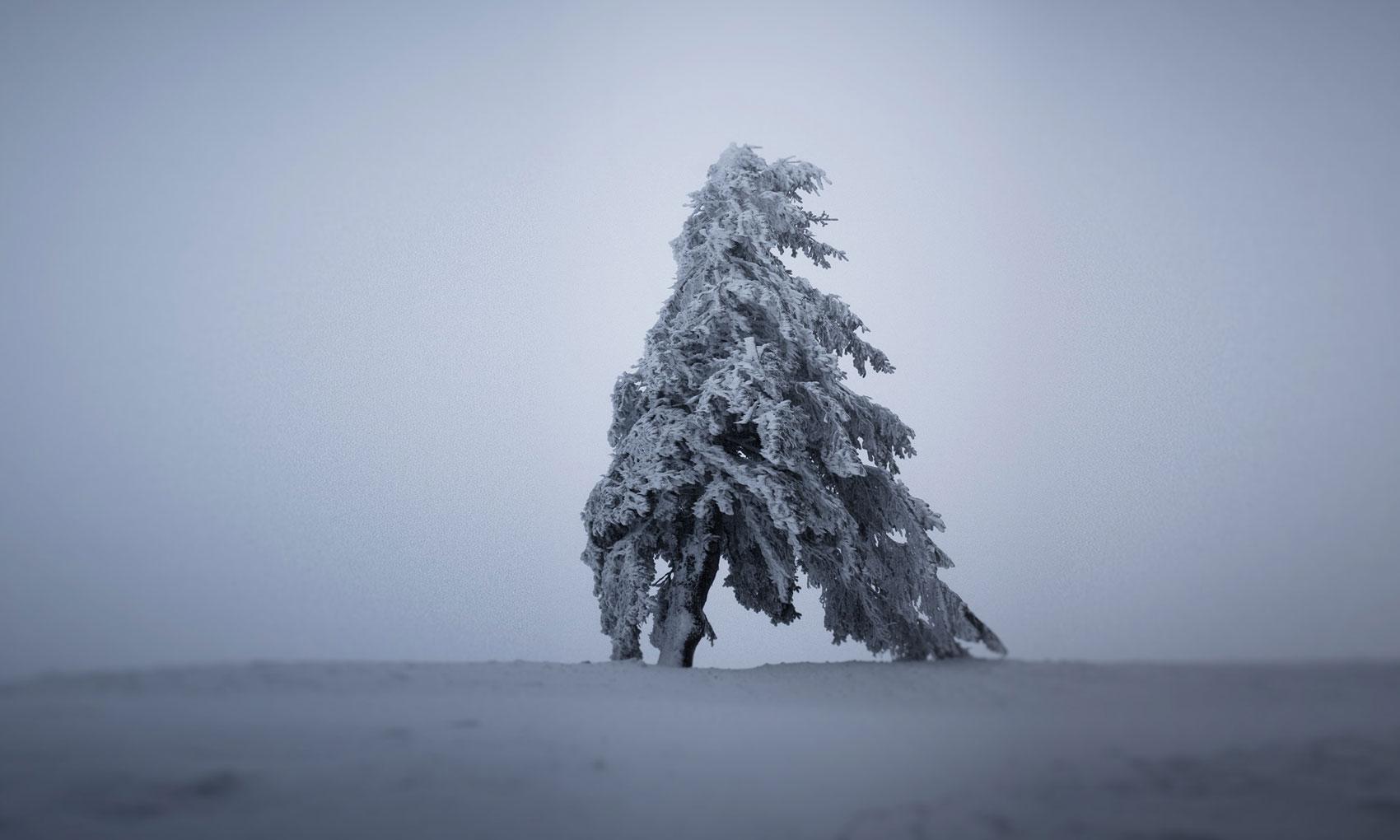 vosges-sous-la-neige-14