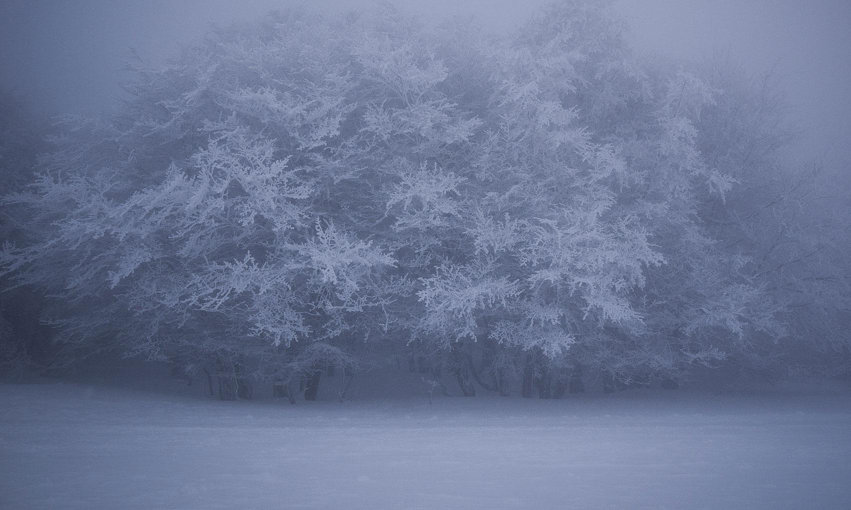 vosges-sous-la-neige-6